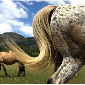 belos cavalos horses